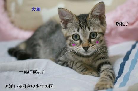 Dsc01045_2