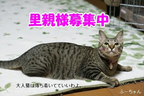 Dsc07418_2